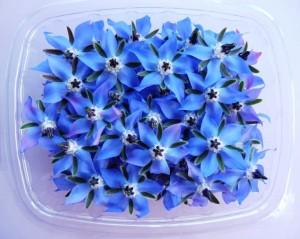borazina-cvijet